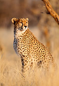 CHE 04 MH0018 01
