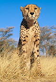 CHE 04 MH0020 01
