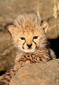 CHE 04 MH0023 01