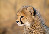 CHE 04 MH0025 01
