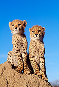 CHE 04 MH0034 01