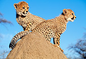 CHE 04 MH0035 01