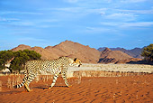 CHE 04 MH0040 01
