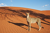 CHE 04 MH0041 01