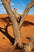 CHE 04 MH0043 01