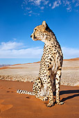 CHE 04 MH0049 01
