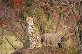 CHE 04 JZ0002 01