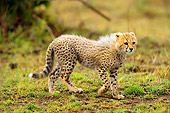 CHE 04 JZ0004 01
