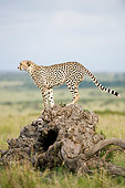 CHE 04 NE0004 01