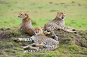 CHE 04 NE0007 01