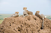 CHE 04 NE0008 01