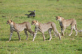 CHE 04 NE0009 01