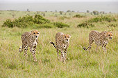 CHE 04 NE0010 01