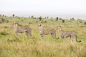 CHE 04 NE0011 01