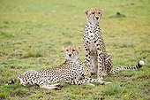 CHE 04 NE0014 01