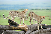 CHE 04 NE0015 01