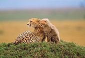CHE 04 RW0003 01