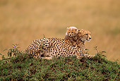 CHE 04 RW0004 01