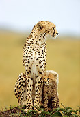 CHE 04 RW0006 01
