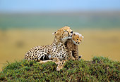 CHE 04 RW0008 01