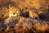 CHE 04 TL0001 01