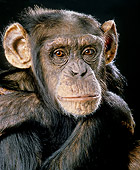 CHI 01 JE0001 01