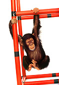 CHI 01 RK0022 08