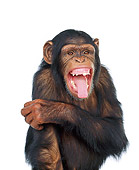 CHI 01 RK0066 03