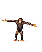 CHI 01 RK0121 04