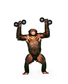 CHI 01 RK0140 02