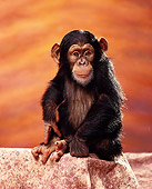 CHI 01 RK0014 04
