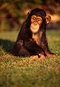 CHI 01 RK0030 01