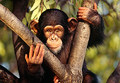 CHI 01 RK0038 05