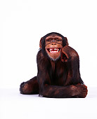 CHI 01 RK0062 05