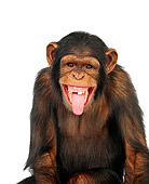 CHI 01 RK0066 02