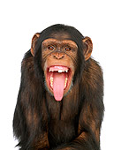 CHI 01 RK0066 05