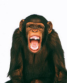 CHI 01 RK0066 06