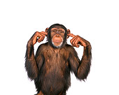 CHI 01 RK0082 07
