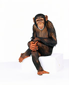 CHI 01 RK0087 01