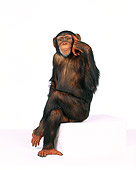 CHI 01 RK0088 03