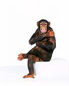 CHI 01 RK0089 02