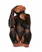 CHI 01 RK0102 01