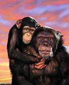 CHI 01 RK0126 04