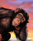CHI 01 RK0129 01