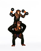 CHI 01 RK0139 01