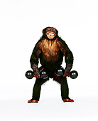 CHI 01 RK0141 03