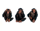 CHI 01 RK0147 01