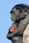 CHI 02 AC0021 01