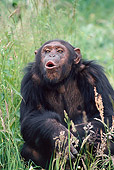 CHI 02 GL0001 01