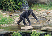 CHI 02 GL0003 01